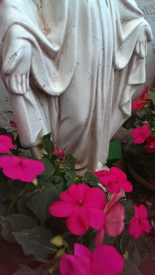 Mary statue, my backyard